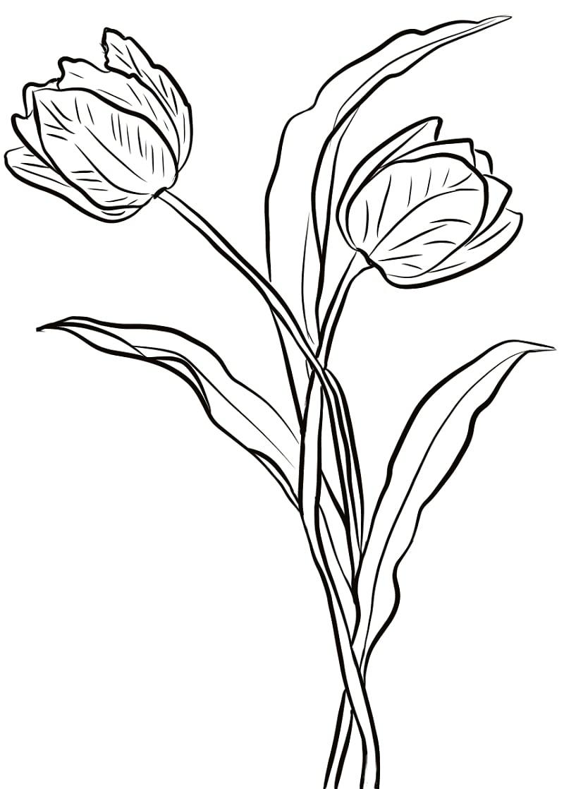 Desenhos de Duas Tulipas 1 para colorir