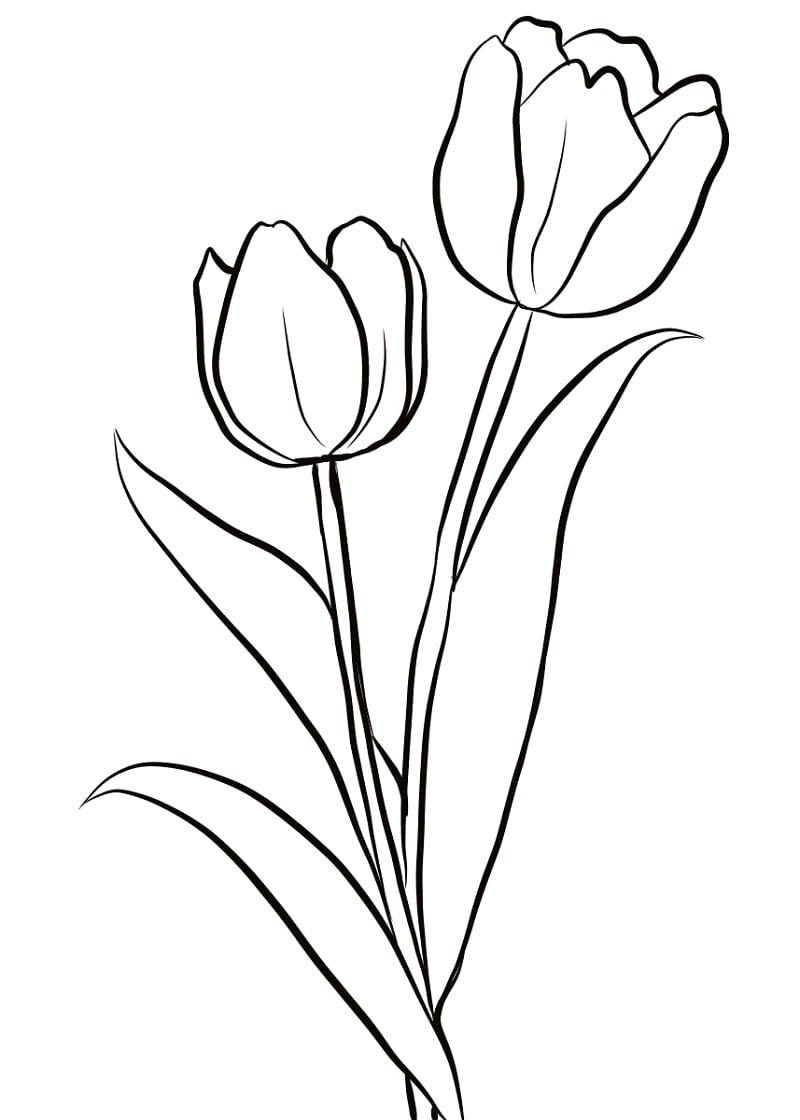 Desenhos de Duas Tulipas para colorir