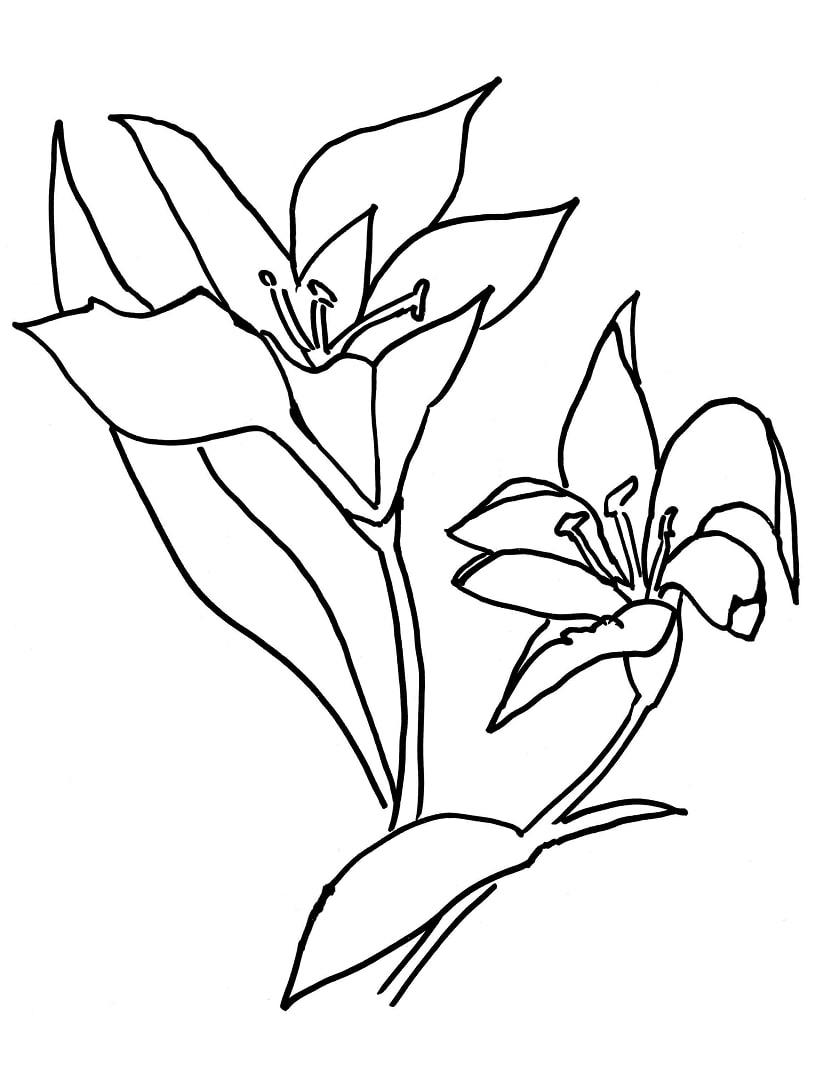 Desenhos de Flor Lírio para colorir