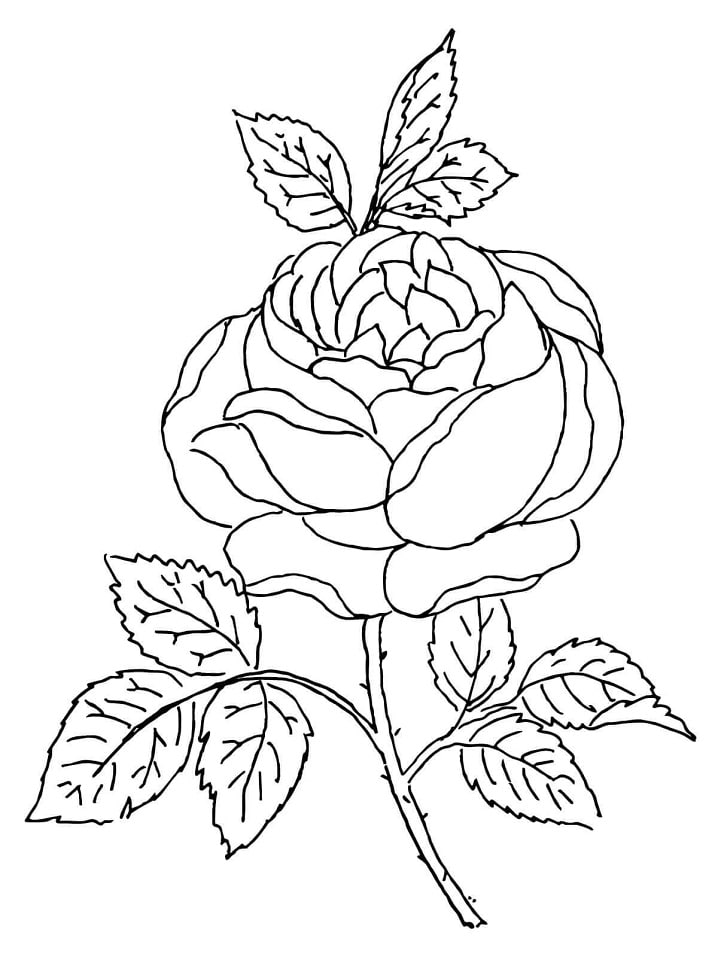 Desenhos de Flor de rosa para colorir