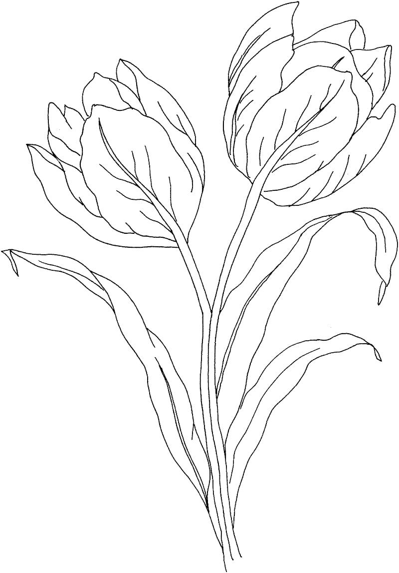 Desenhos de Flor de tulipas 1 para colorir