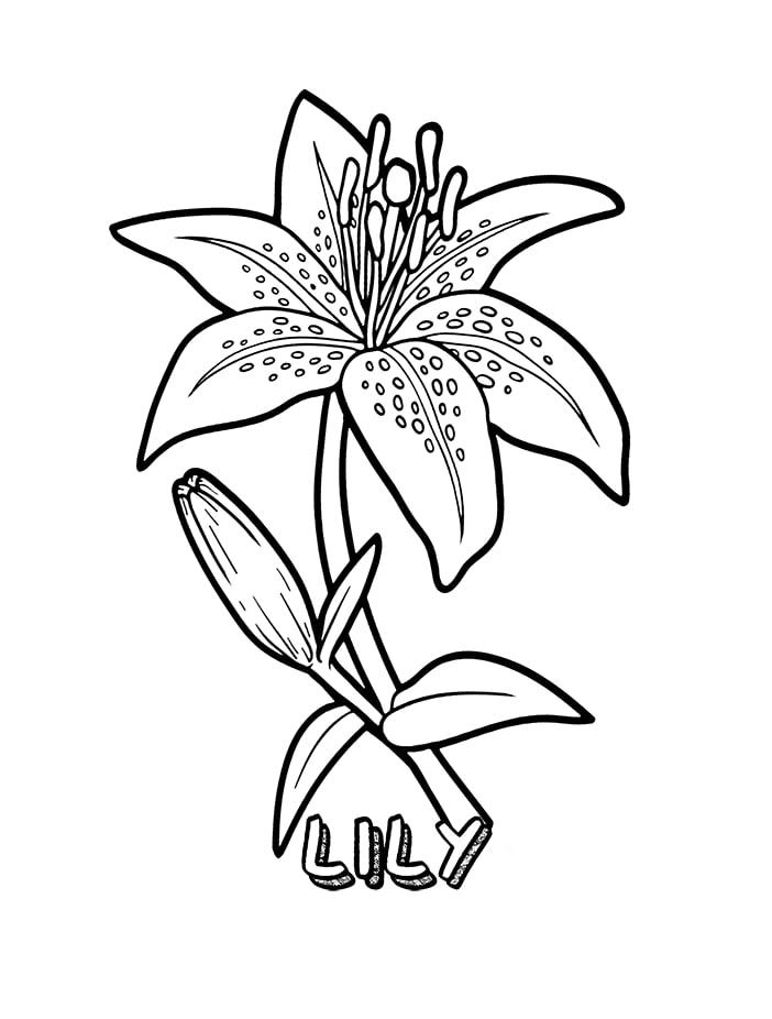 Desenhos de Flores de Lírio 1 para colorir