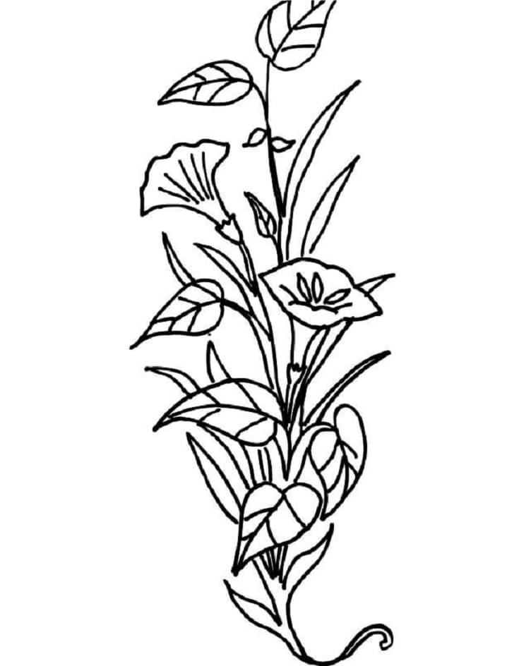 Desenhos de Flores de Lírio para colorir