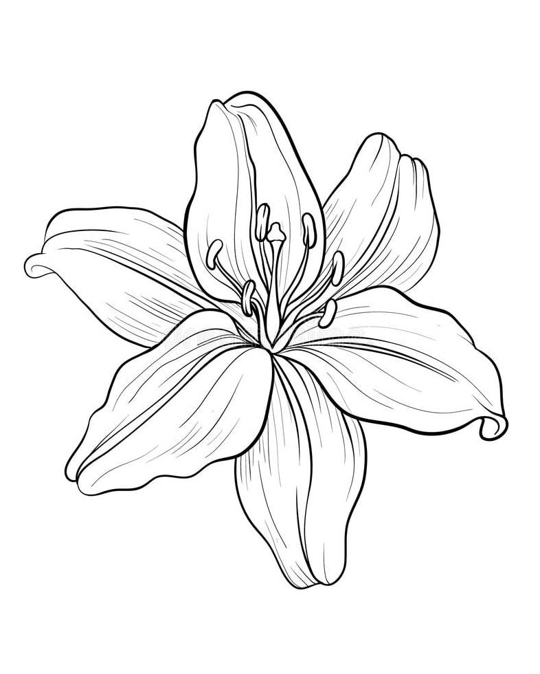 Desenhos de Lírio 1 para colorir