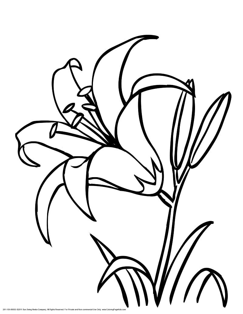 Desenhos de Lírio 2 para colorir