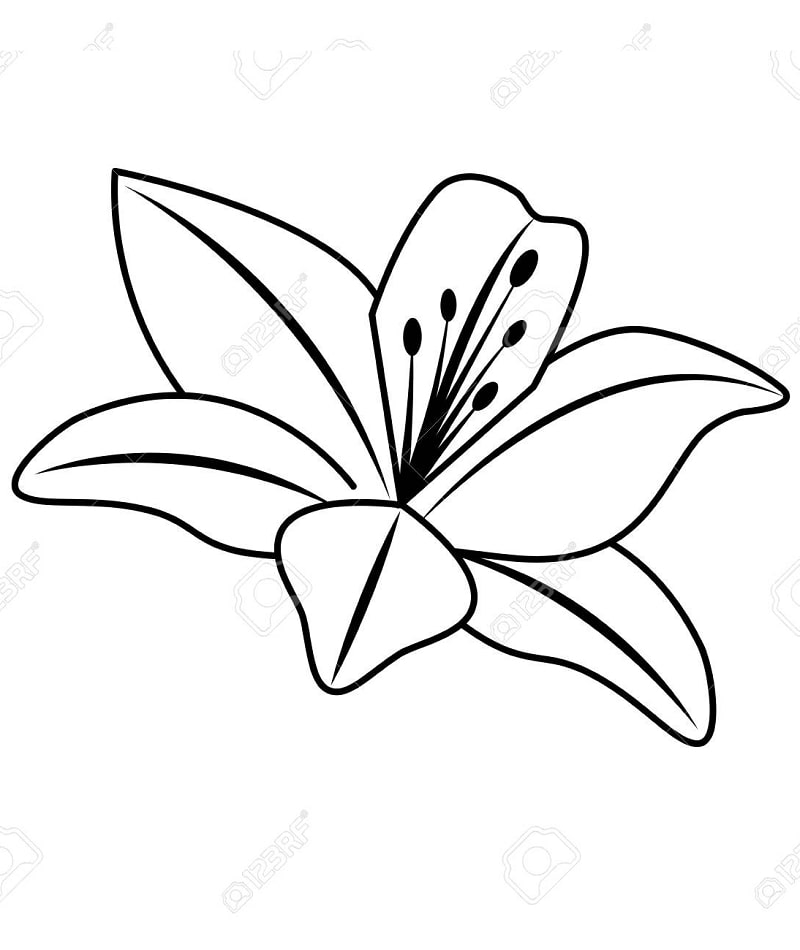 Desenhos de Lírio 3 para colorir