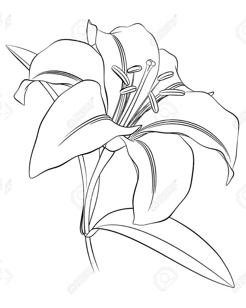 Desenhos de Lírio 5 para colorir