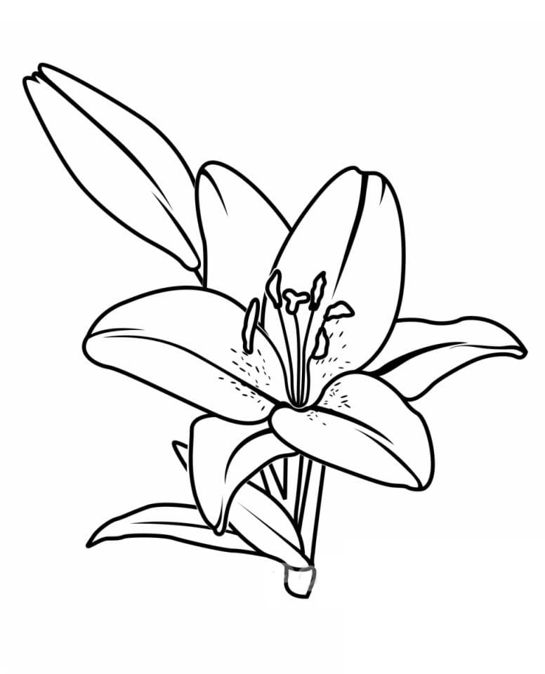 Desenhos de Lírio 6 para colorir