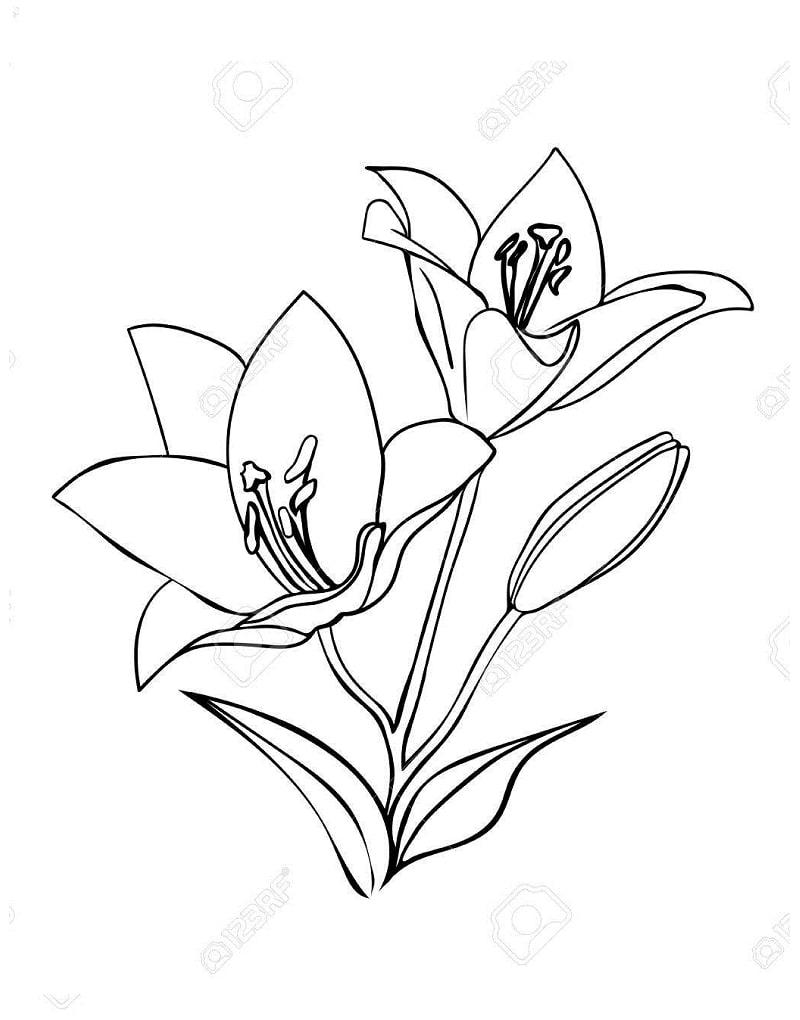 Desenhos de Lírios 1 para colorir