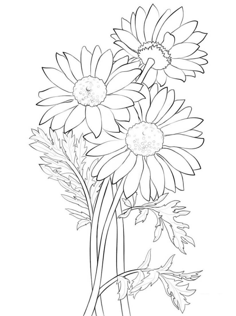 Desenhos de Margarida 2 para colorir