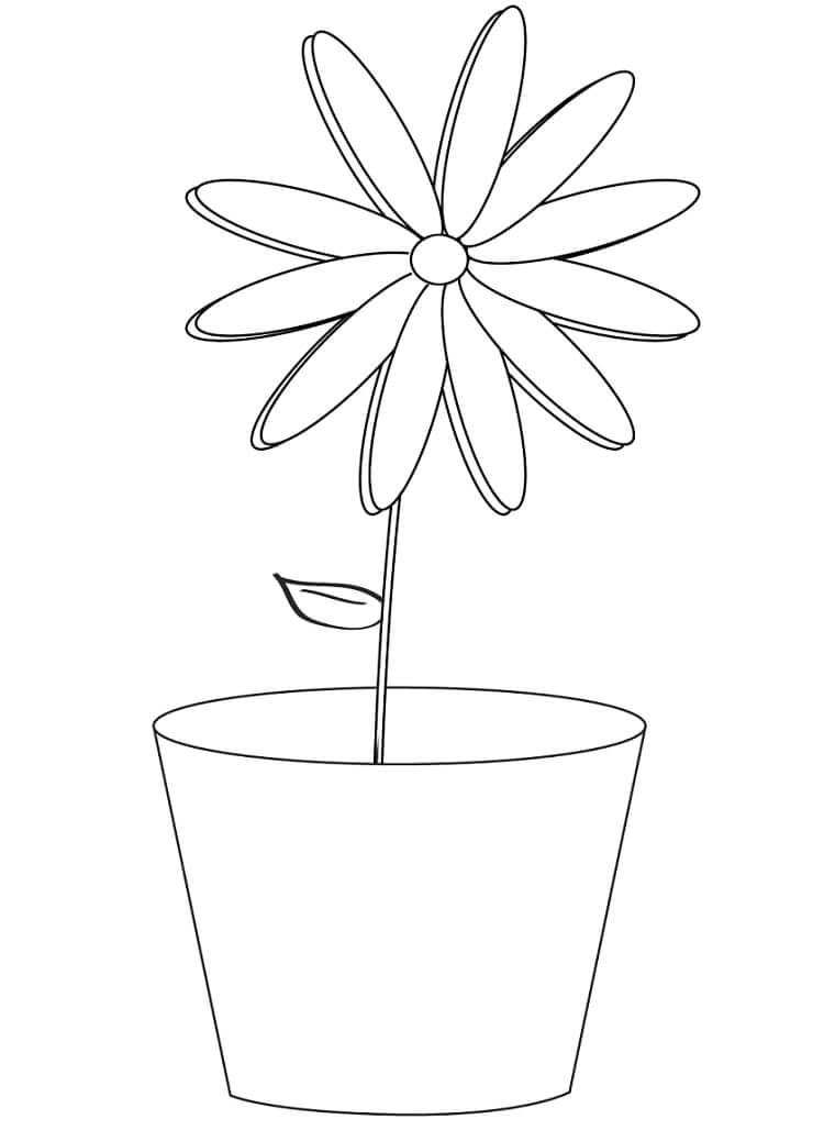 Desenhos de Margarida em uma panela 1 para colorir