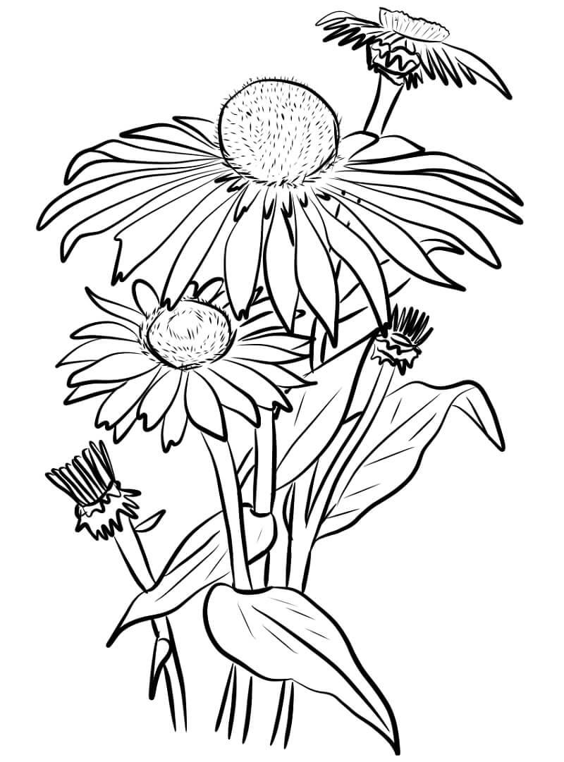 Desenhos de Margaridas 2 para colorir