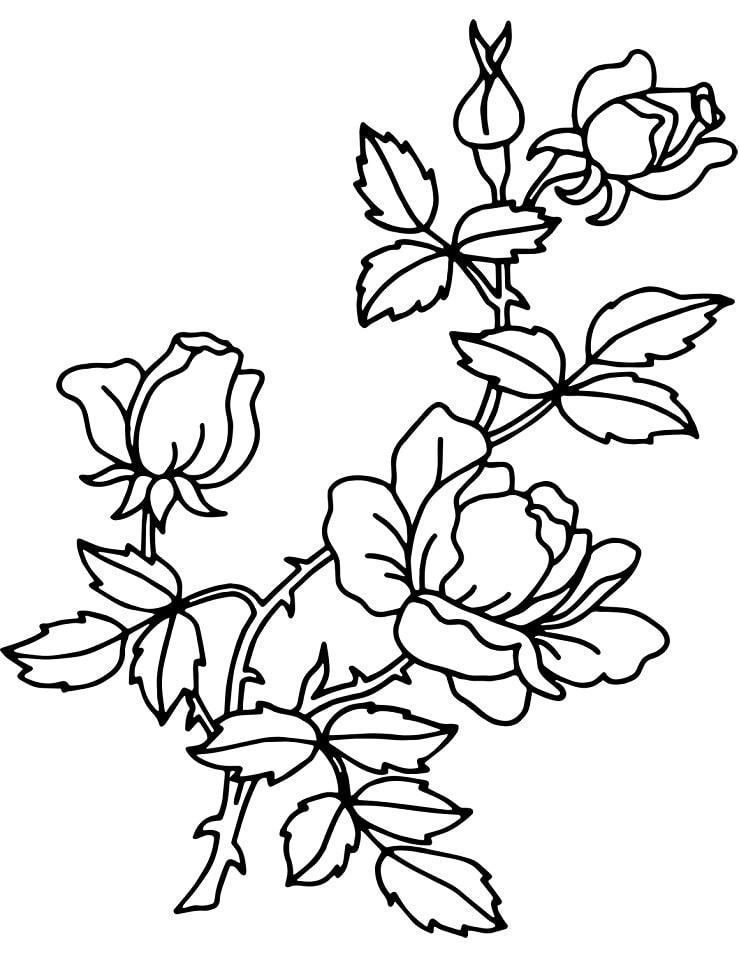 Desenhos de Rosa 1 para colorir