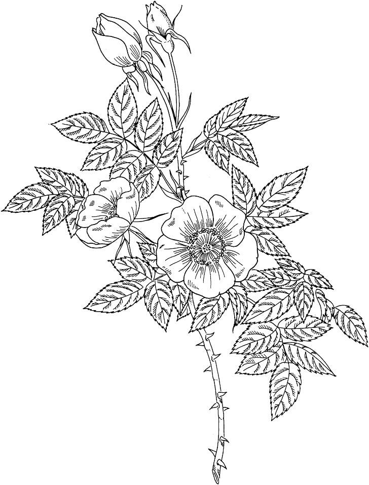 Desenhos de Rosa 3 para colorir