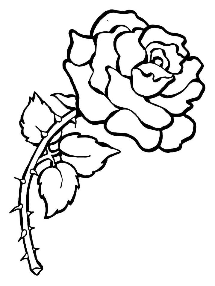 Desenhos de Rosa com espinhos para colorir