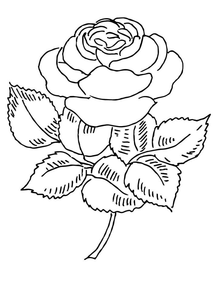 Desenhos de Rosa florescendo para colorir