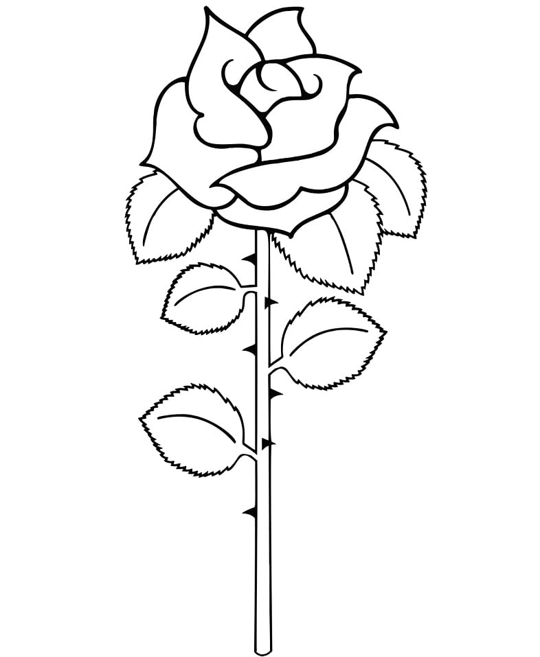 Desenhos de Rosa simples para colorir
