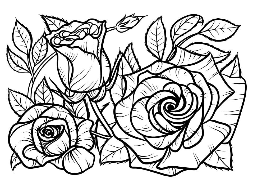 Desenhos de Rosas 1 para colorir