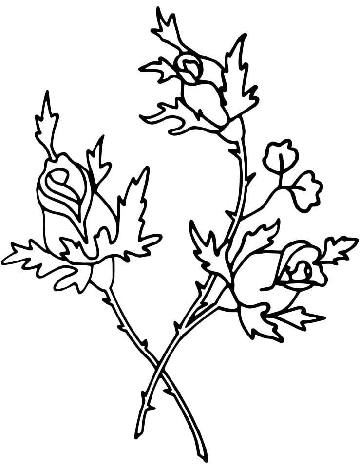 Desenhos de Rosas 3 para colorir