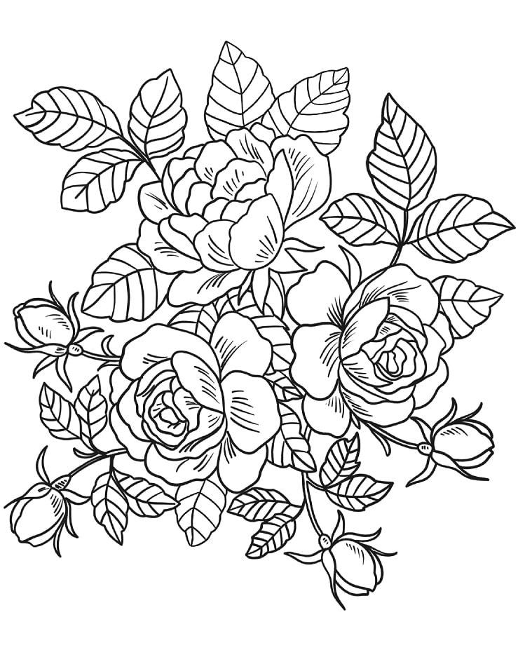 Desenhos de Rosas 4 para colorir