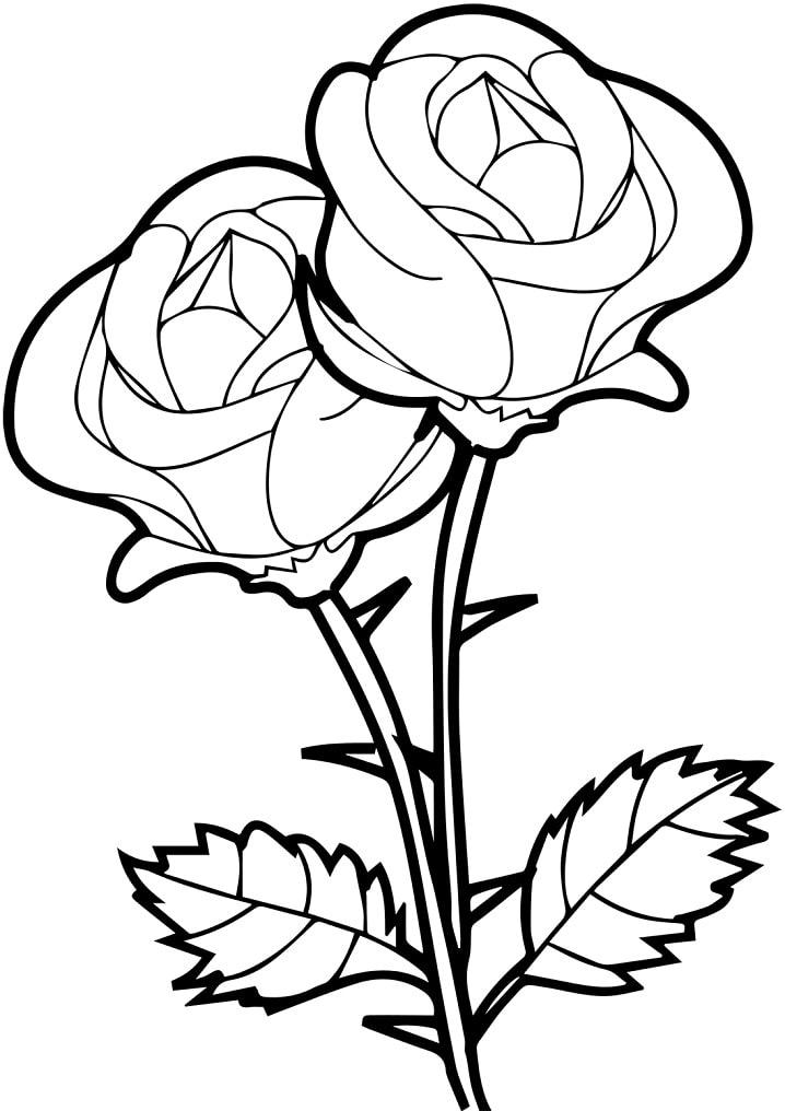 Rosas para Colorir