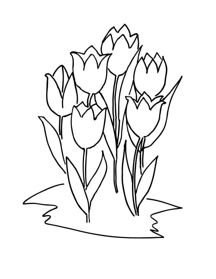 Desenhos de Seis tulipas para colorir