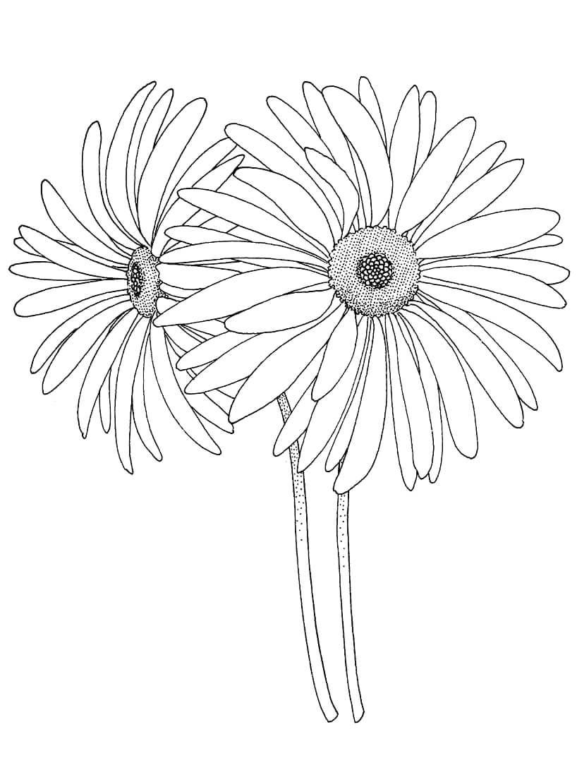 Desenhos de Susana-dos-olhos-negros para colorir