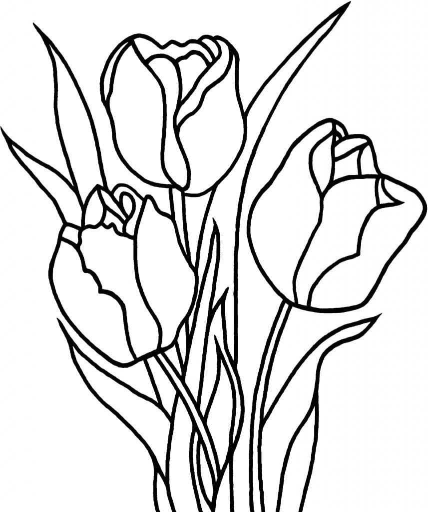 Desenhos de Três Tulipas 2 para colorir