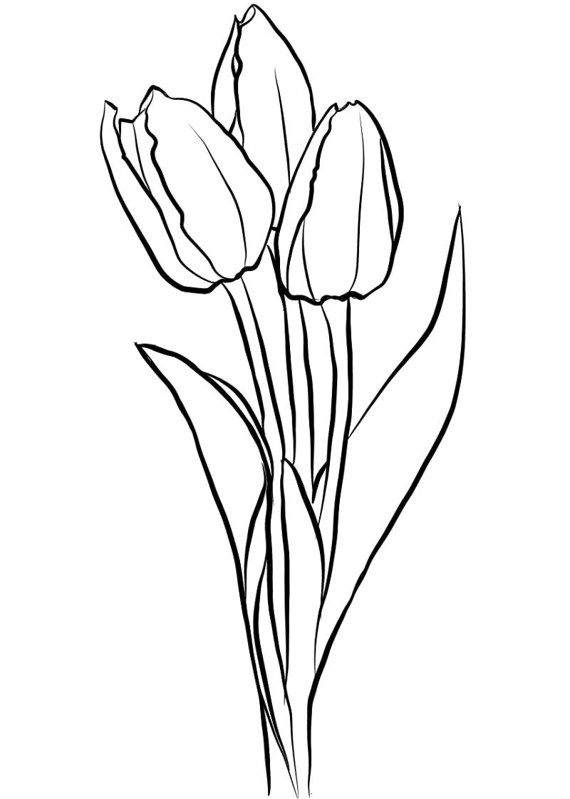 Desenhos de Três Tulipas para colorir
