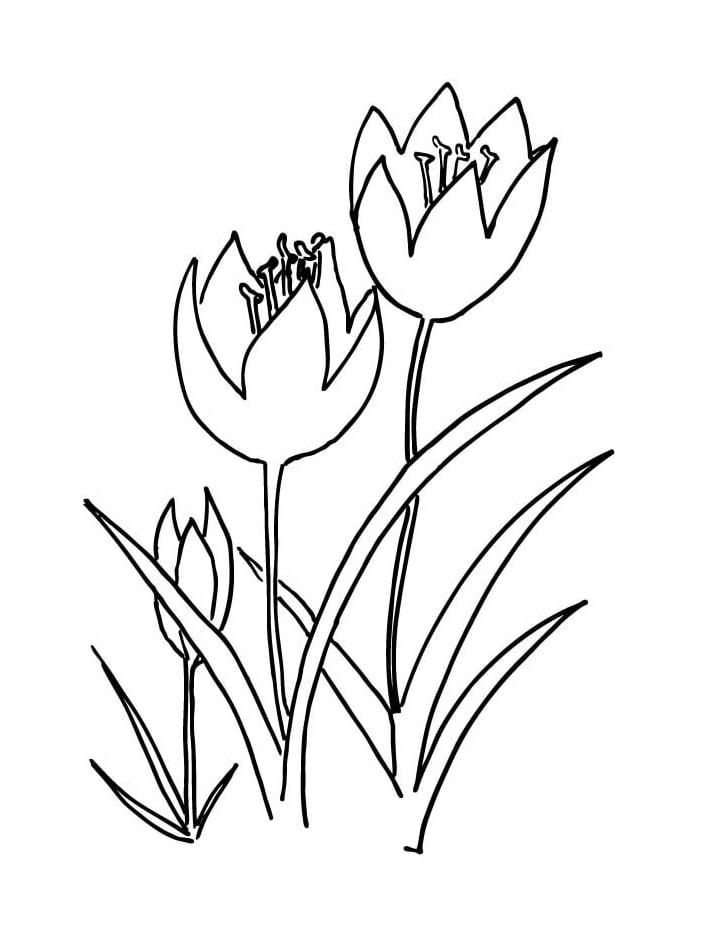 Desenhos de Três tulipas 1 para colorir