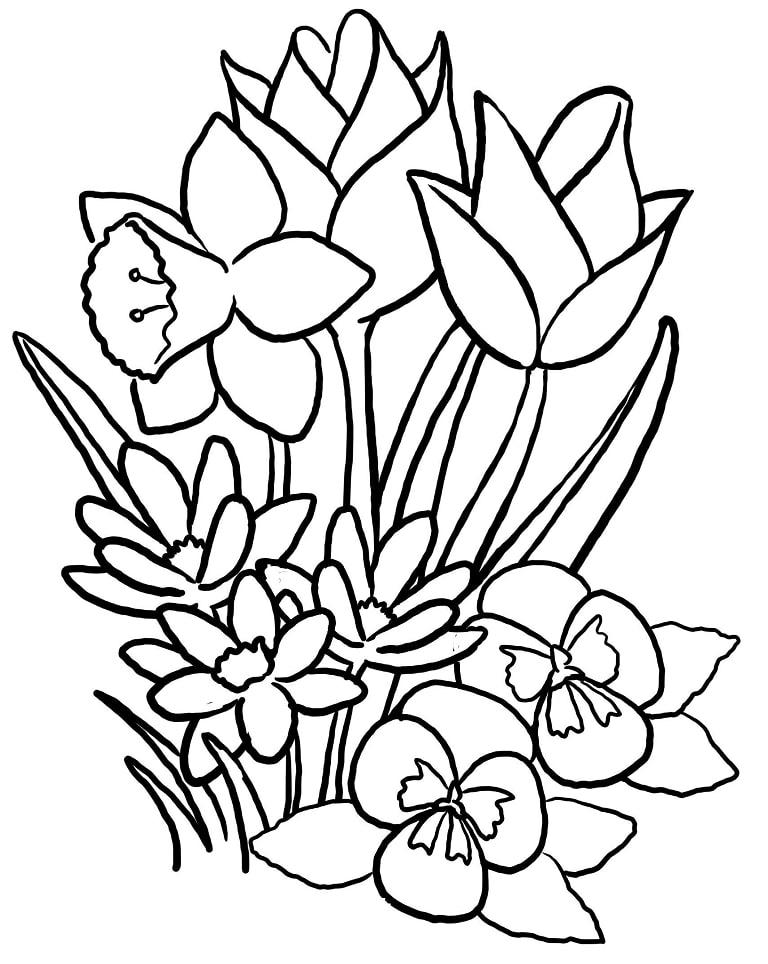 Desenhos de Tulipas 1 para colorir