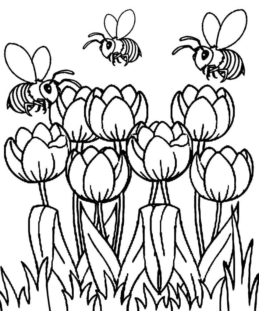 Desenhos de Tulipas e abelhas para colorir