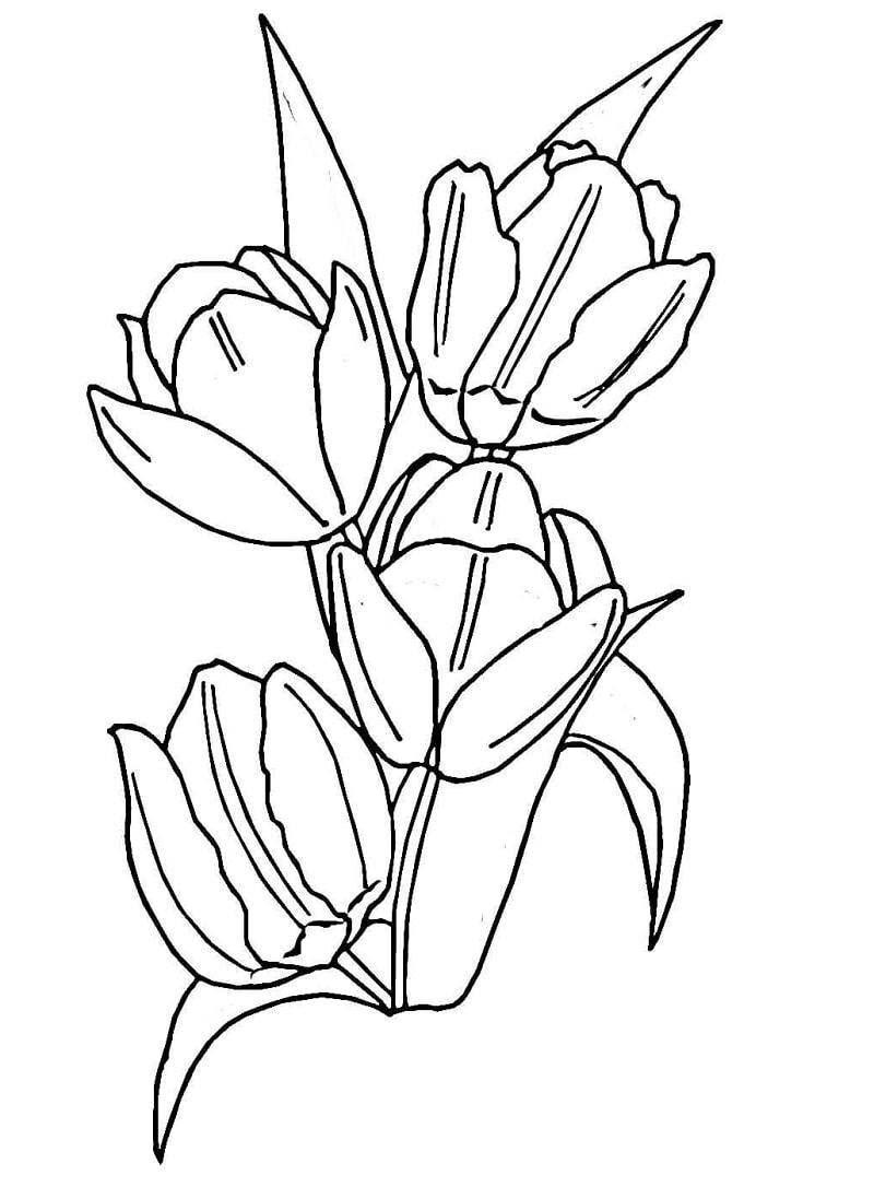 Desenhos de Tulipas para colorir