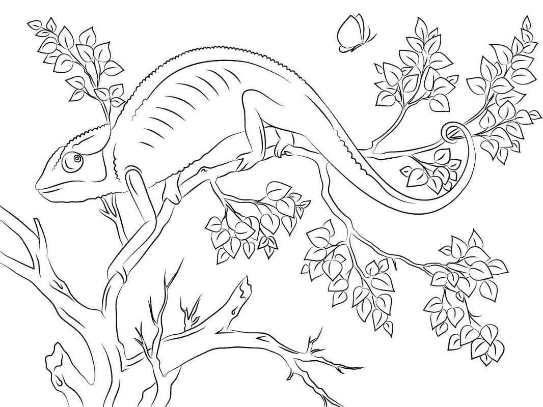 Desenhos de Camaleão Fofo para colorir