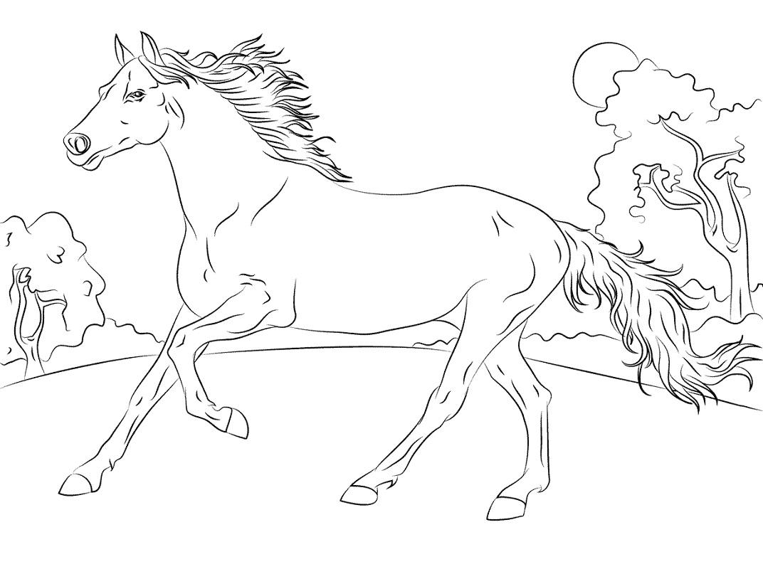 Desenhos de Cavalo Árabe Correndo para colorir