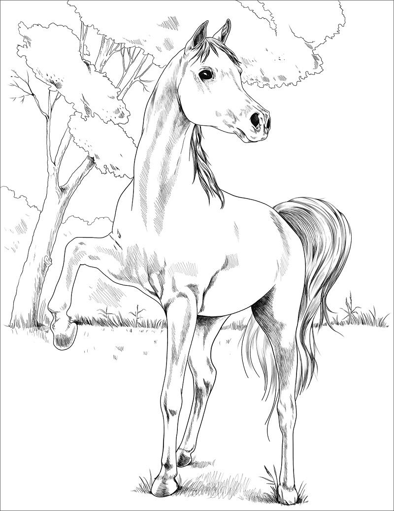 Desenhos de Cavalo Árabe Egípcio para colorir