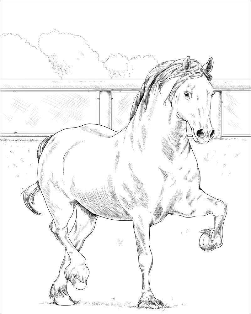 Desenhos de Cavalo Adorável para colorir