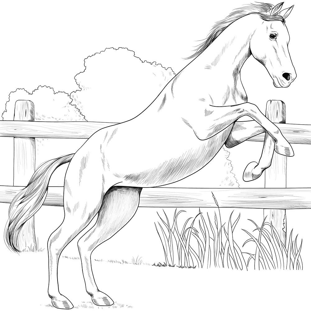 Desenhos de Cavalo Anglo-árabe para colorir