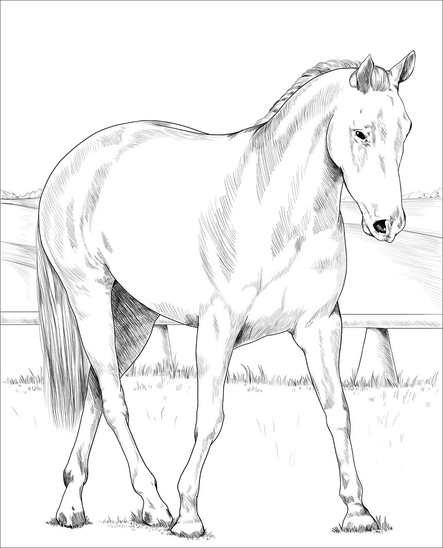 Desenhos de Cavalo Australiano para colorir