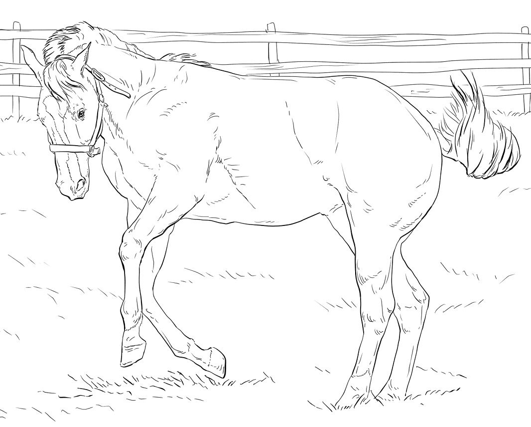 Desenhos de Cavalo Empinado para colorir