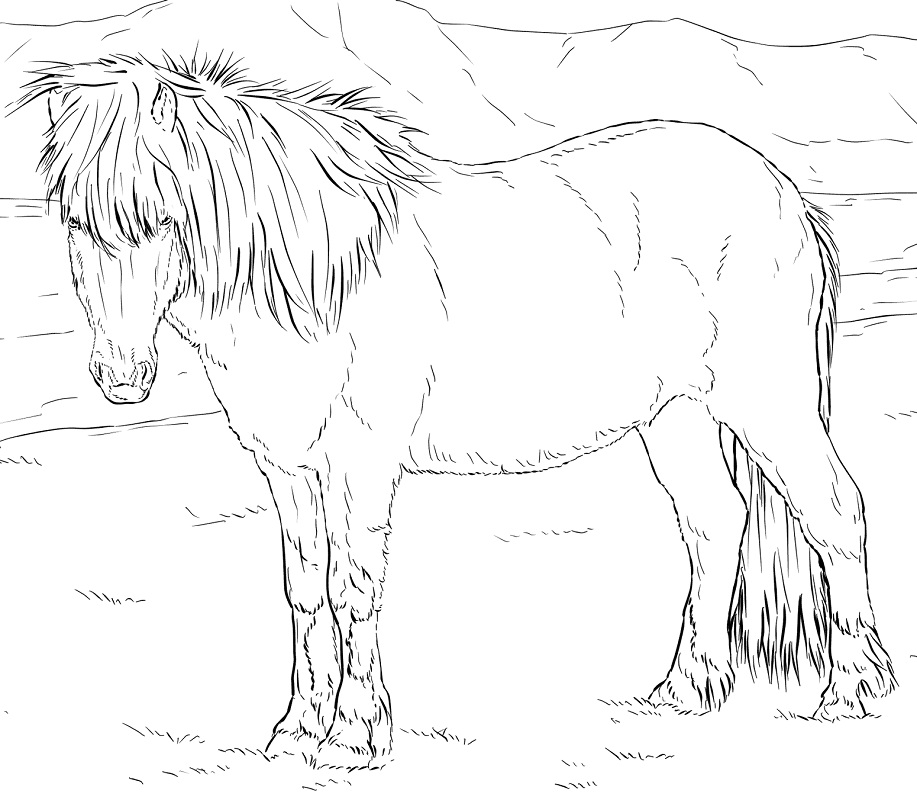 Desenhos de Cavalo Islandês para colorir