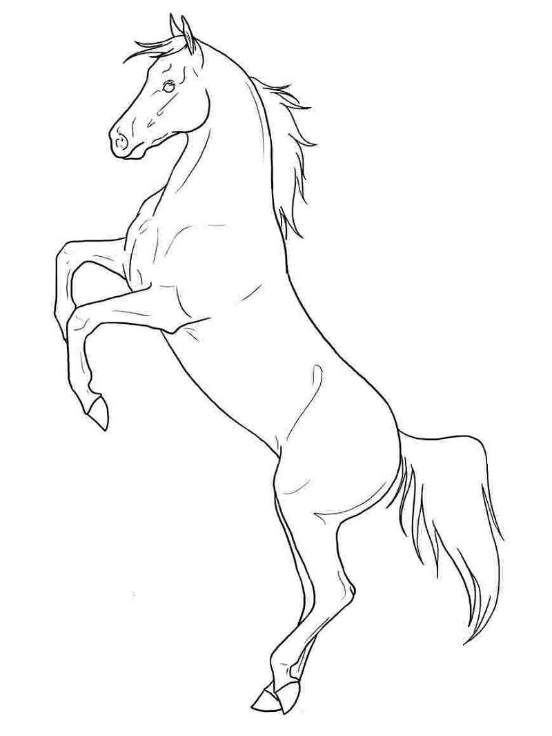 Desenhos de Cavalo Maravilhoso para colorir