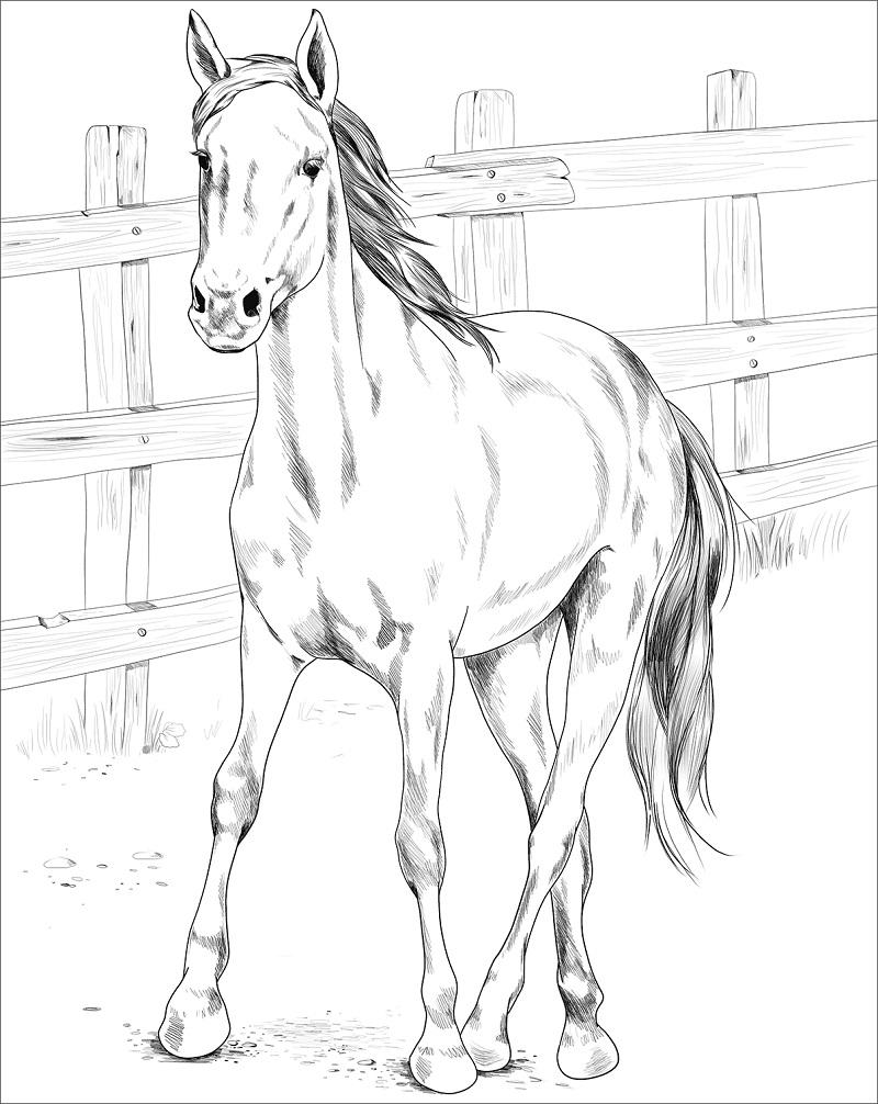 Desenhos de Cavalo Mustang Kiger para colorir