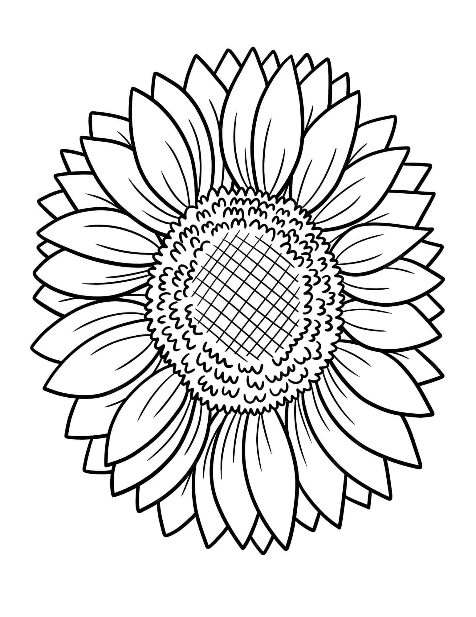 Desenhos de girassol normal para colorir
