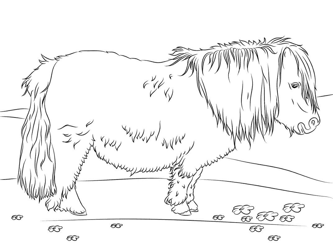 Desenhos de Pônei Shetland Colorir para colorir