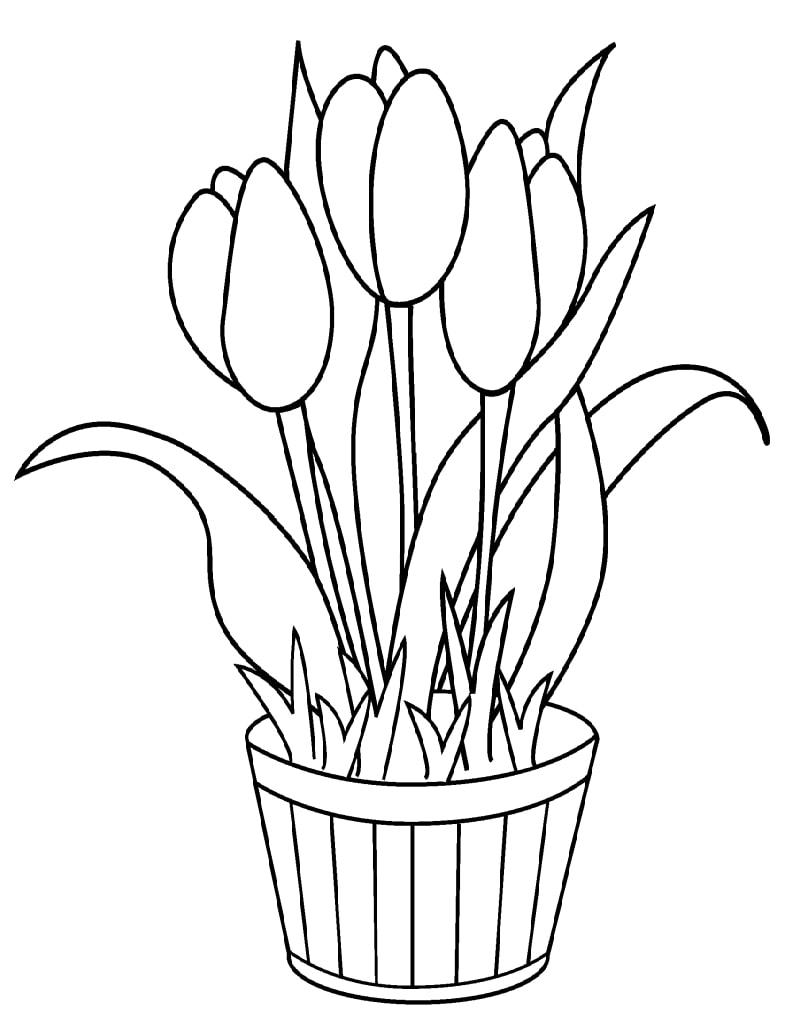 Tulipa para Colorir