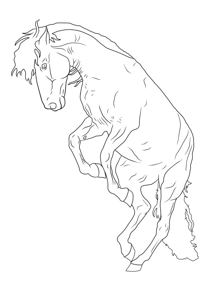 Desenhos de Um Cavalo para colorir