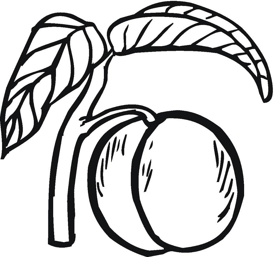 Desenhos de Fruta Pêssego para colorir