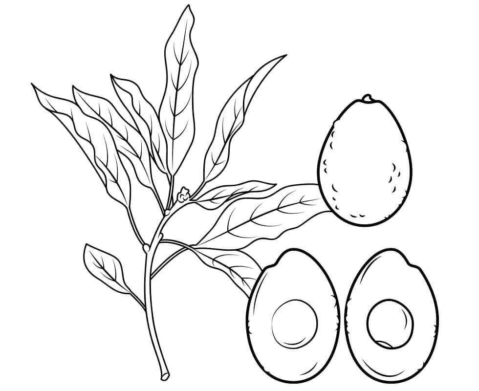 Desenhos de Galho de Abacate para colorir