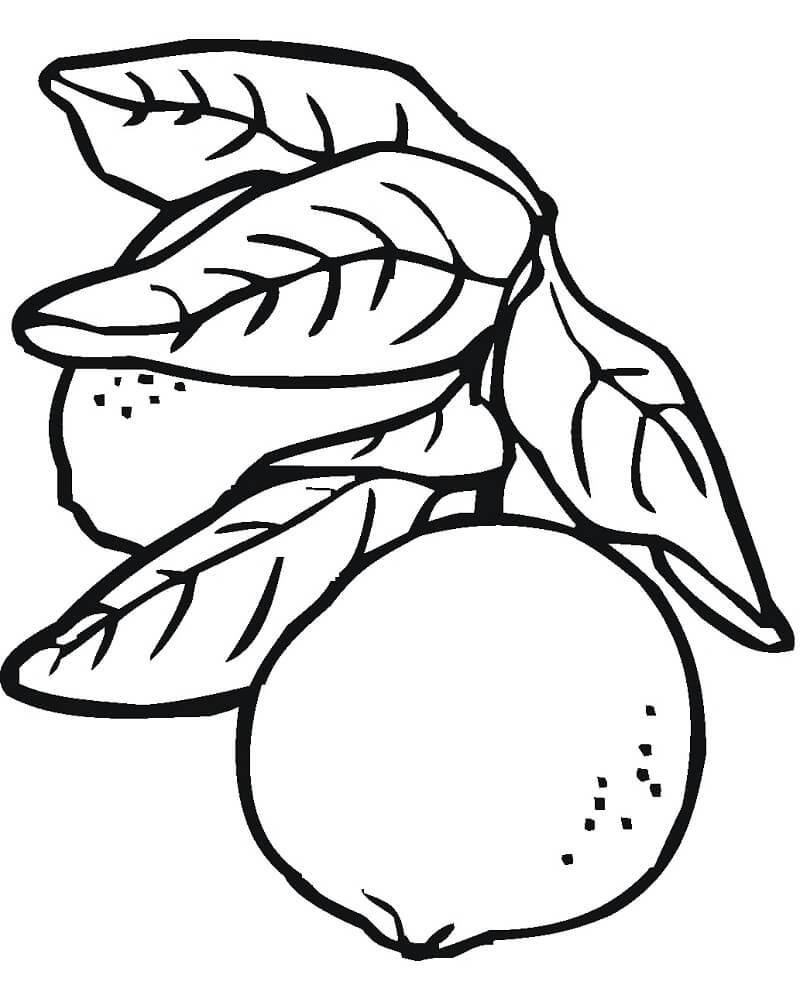 Desenhos de Limões 2 para colorir